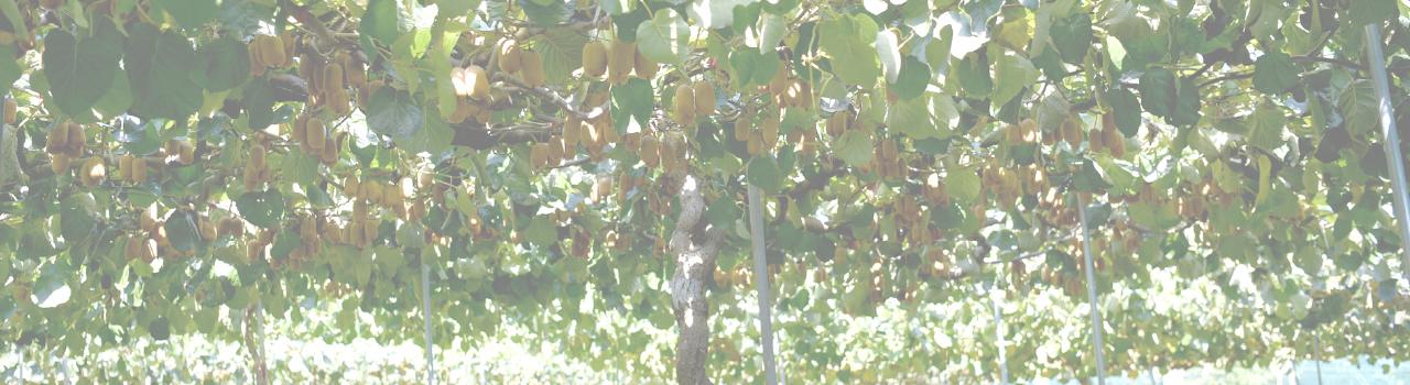 果実の相田園